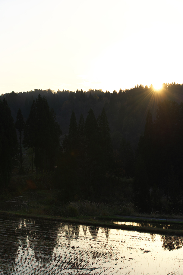 Sunset on a Rice Field